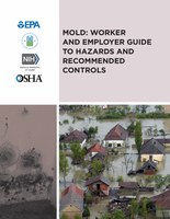 A Brief Guide to Mold in the Workplace