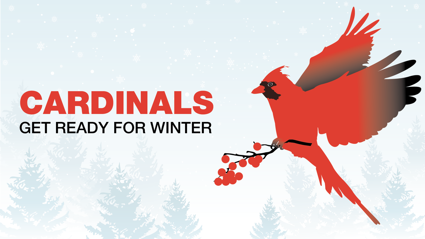 Cardinals get ready for Winter