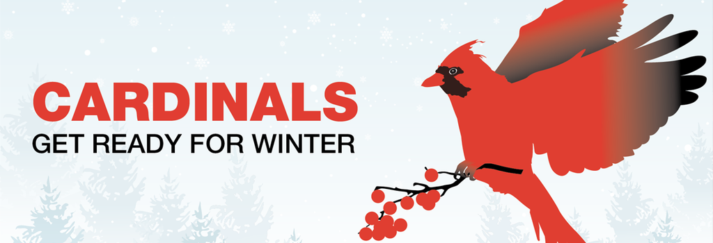 Cardinals Get Ready for the Winter